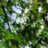 ghunghru 038 - Hi-Vis [25-06-2020]