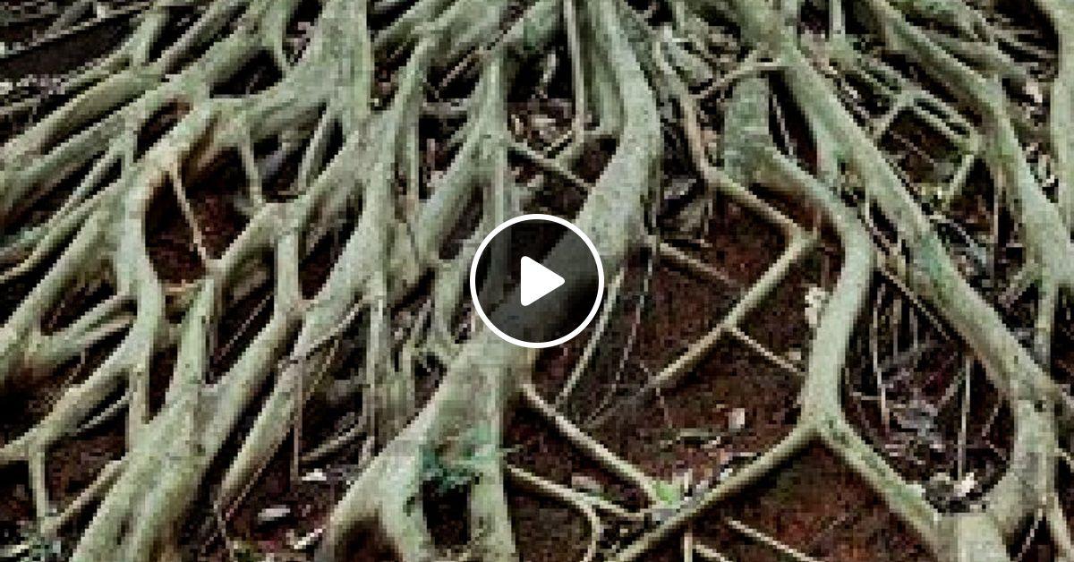 Lee Perry & The Upsetters - Blackboard Jungle Dub