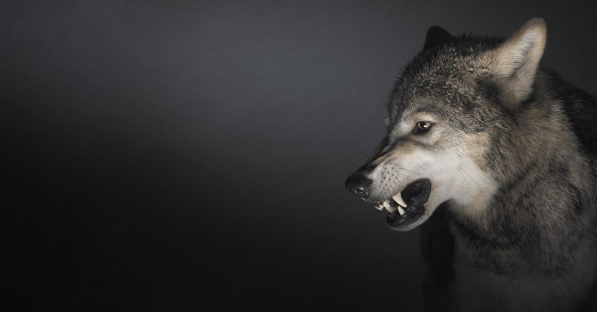 Волки картинки с собаками с надписями, открытки днем