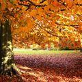 Autumnal Beats