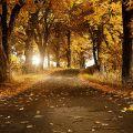 Im Herbst fallen die Blätter tanzend.