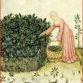 Ballade botanique No. 1