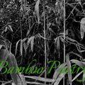 Bamboo Poetry - Japanese Spiritual Vibe Mix