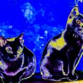Gatos Negros DJ set