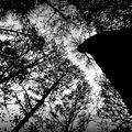 Illusions of Autumn
