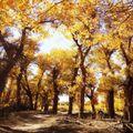 Golden Hours - Autumn Tape No. 6