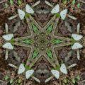 Psilocybic Meditation (Clone604 - Slow Goa Mix 120-128bpm)