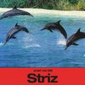 Smart Mix 49: Striz