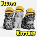 Fluffy Kittens - 1st Kitten