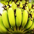 BananaHustle Sunset Vibe