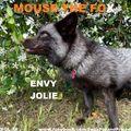 MOUSE THE FOX - ENVY JOLIE - VOL.32 - 26.09.2021