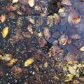 Offie Mag Radio: What does Autumn smell like?