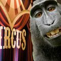 The Sunday Roast With Neil Jones & A Circus Full Of Monkeys Special  27/09/20