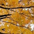 Autumn feelings