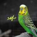 Sunday Mornin' Comin' Down ~ A Side Sequence 148 : The Wild Budgies of Apodaca Park ~ Airdate 5.2.21
