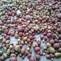 Brief Interlude - More Small Potatoes