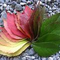 Leaf progression