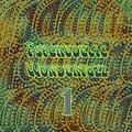Psychedelic Wonderfuzz #1