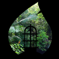 Sounds of the Puerto Rican Rainforest