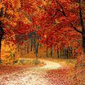 Autumn2019