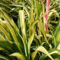 Dig It Main FM- Sandra Hodge Castlemaine Botanical Gardens