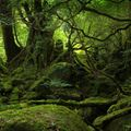 Shaman of the Sleeping Forest (Deep Downtempo Electronica Mix)
