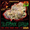Silverback Gorilla - Nu Roots Mixtape 2015