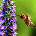 Listen to the Hummingbird