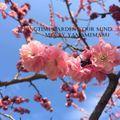 Springtime Garden Your Mind