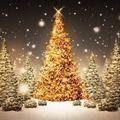 La Reflexión de hoy - Quiero ser tu pino Señor en esta Navidad