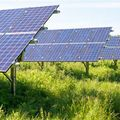 Sophy Fearnley Whittingstall Solar Farms