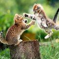 Jungle Katzen