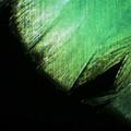 Twin Peetz : Microscopic 033 (February 2017)