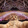 Techno Cats