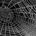 The Spider's Web (R3aktor3Mix)