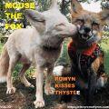 MOUSE THE FOX - ROWYN KISSES THYSTLE - VOL.33 - 10.10.2021