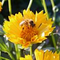 Summer Series 2021: Invite Pollinators To Play