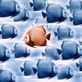 Peter Pea - Upload proti proudu