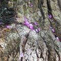 Treehoppings