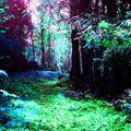 DJ SassyFrasS - The Funky Forest Frenzy 08/28/21