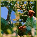Jazzy Chilled Downtempo Instrumental : Buddha in a Tree