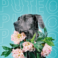 PUTEO - Summer Dancers