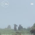 Soft Landing - 15 September 2020 - Dublin Digital Radio