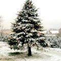 Quietmusic - December 20 (Hour 1 excerpt)