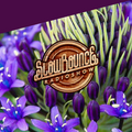 SlowBounce Radio #285 with Dj Septik - Dancehall, Tropical Bass