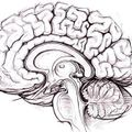 "5/24/16 Show feat. Cameron Ellis on Consciousness and Cog. Neuro. + Ingrid Ockert on ""Making Nature"""