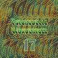 Psychedelic Wonderfuzz #17