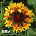 Utopia w/ Centrosoma - 8th June 2018