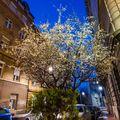 Prolećni Noćurak :: This Almost Spring