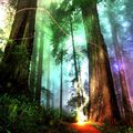 Schitzoph0nik - The Funky Forest Frenzy 08/28/21